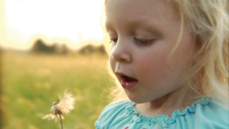 little girl attempts to blow dandelion web